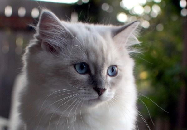 160922beautycat