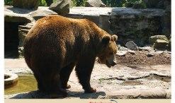 Kaliningrad Zoo; Bears Kaliningrad Zoo; Bears in Zoo Russia;