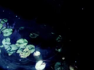 水草と飛び交う光の壁紙(4パターン)