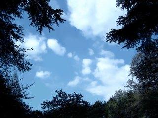 仰ぎ見る木々と空 差分:日中/夕方/星空