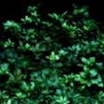 植物の写真素材