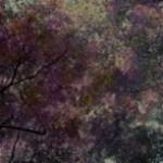 草木の写真素材