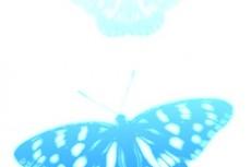 発光する青い蝶