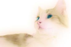 見上げる緑の目の猫