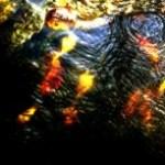 紅葉が沈む川の写真素材