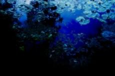 蓮池の写真素材