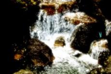 小川を舞う蝶の壁紙