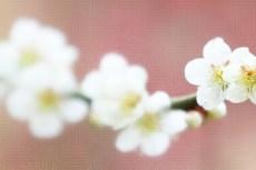 cover_flower005