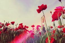flower404