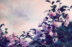 flower416