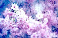flower417-2