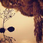 【高解像度】静かな雰囲気の鏡面の湖(3パターン)