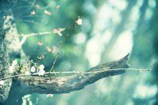 flower419-2