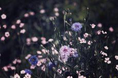 flower453-2