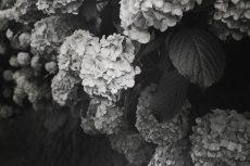 flower474-3