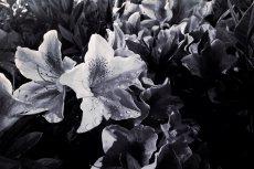 flower485