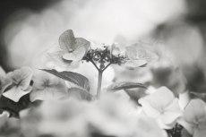 flower518-3