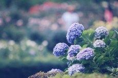 flower524