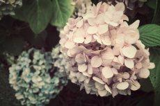 flower544