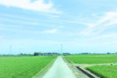 scenery393