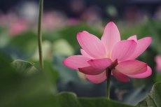 flower568-2