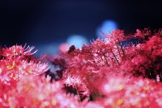 flower597