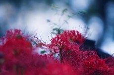 flower606