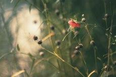 flower616-2