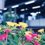 【高解像度】駅のホームと白粉花(オシロイバナ)(3パターン)