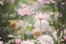 flower637-3