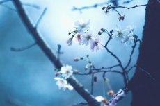 flower641