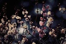 flower664