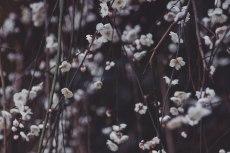 flower673