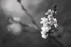 flower675-3