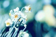 flower681