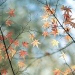 【高解像度】散り残る紅葉(3パターン)