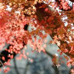 【高解像度】穏やかな紅葉(3パターン)
