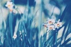 flower704