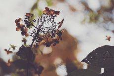 flower713