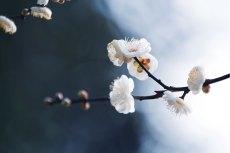 flower725
