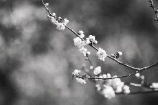 flower729-3