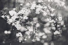 flower760-3
