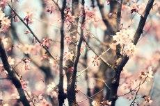 flower766