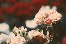 flower806