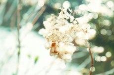 flower803-2