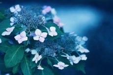 flower813