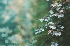 flower815-2
