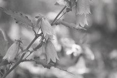 flower827-3