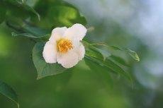 flower848