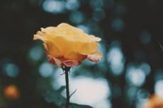 flower864